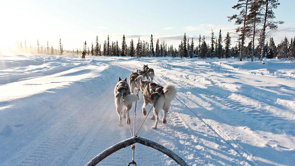 dog-sled-kiruna-sweden-lapland